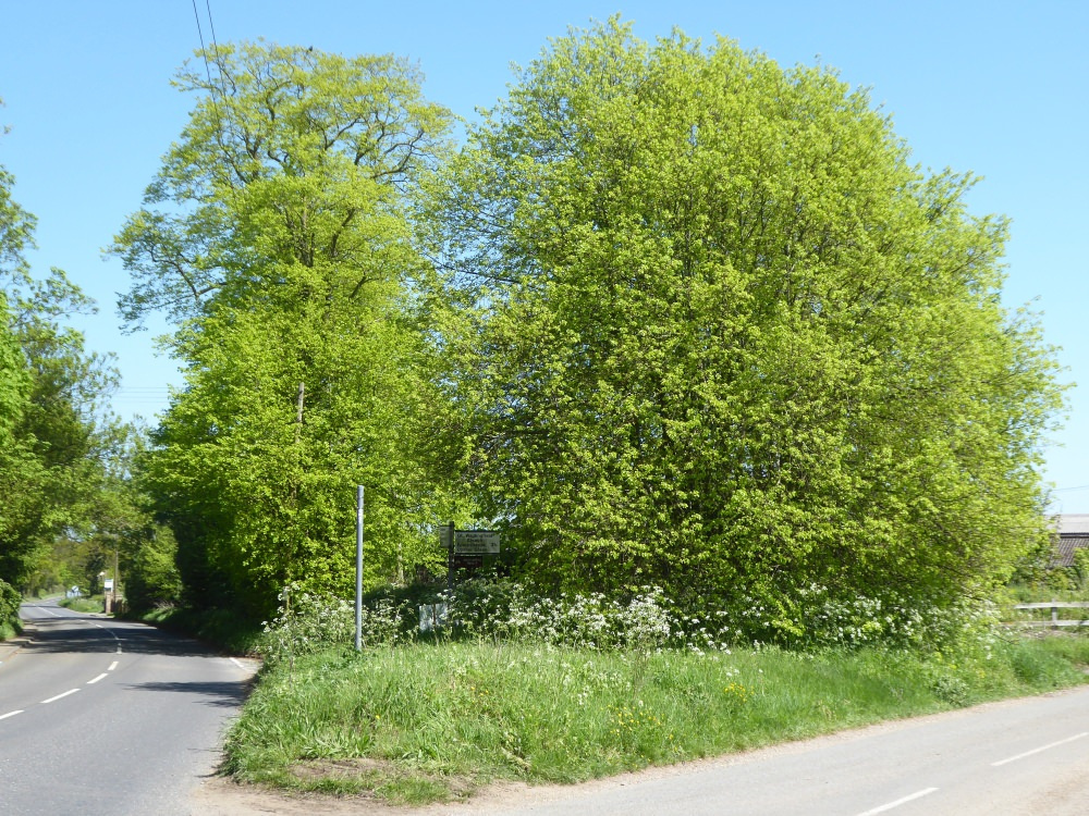 Magnificent Trees on B1115