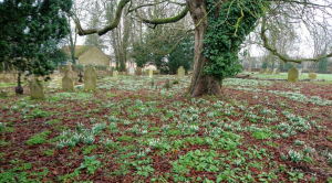 Spring in the Great Waldingfield Churchyard
