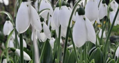 Spring in Great Waldingfield